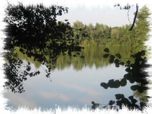Erlensee 09.2012-015